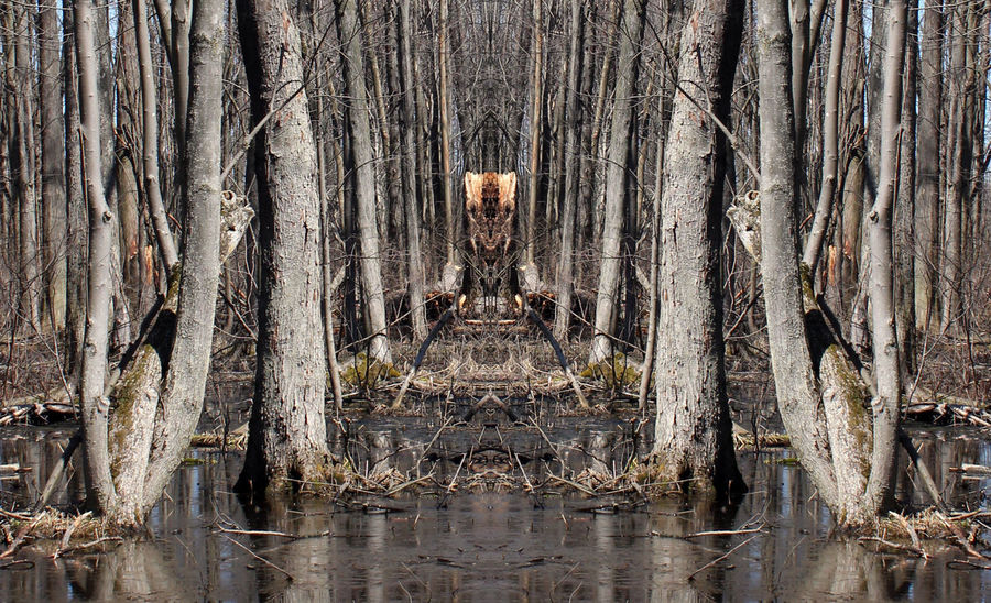 Alien faces in the swamp Creepy Creepy Face Day Forest Haunted Mirror Image Nature No People Outdoors Reflection Reflections Reflections In The Water Swamp Tree Tree Trunk Trippy Unexpected Water Wood Wood - Material