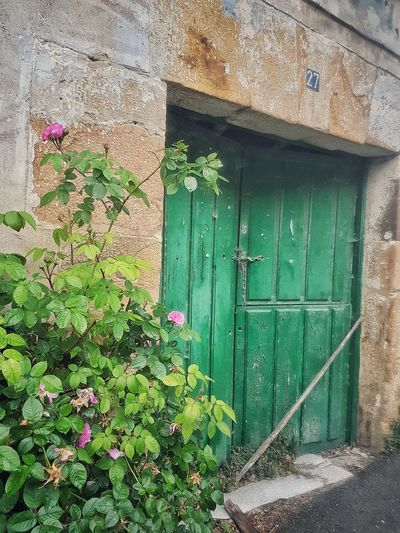 Puerta Verde Movilgrafias SPAIN Planta Flores Nature Architecture Green Color No People Building Exterior Door