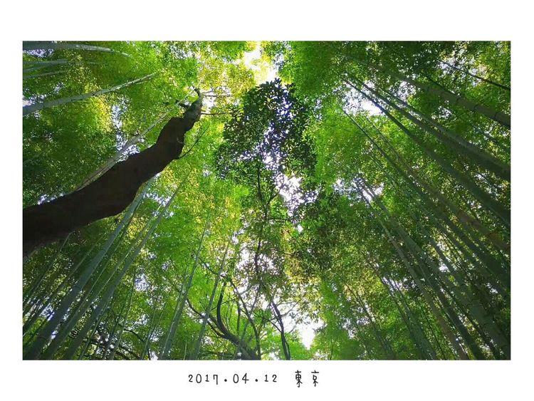 後悔有期,東京! Japan Tokyo Green Tree Travel Hello World Photography First Eyeem Photo Enjoying Life