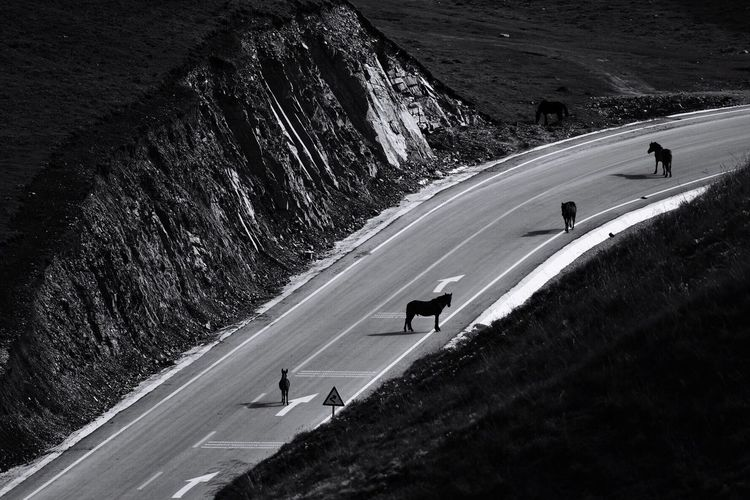 High angle view of horses standing on road
