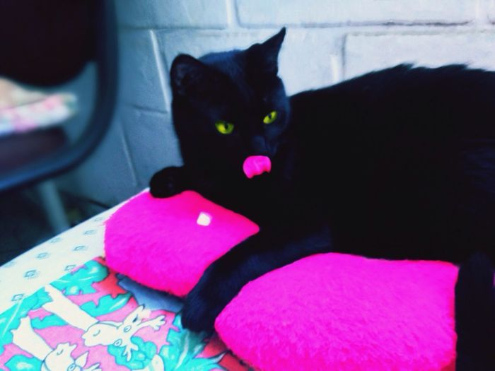 Neon Life cat Brazil Winter Neon Neon Color Cat Cat Lovers Eyeyellow Pink Color Neon Pink Cat Life No People Hapy Day Pets Chillout Neon Life
