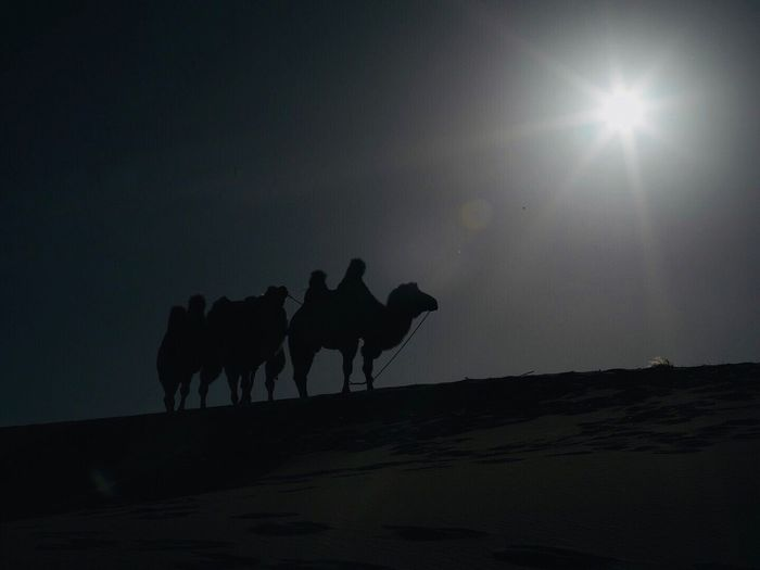 CamelTroopers Domestic Animals Silhouette Mammal Animal Themes Sky Sun Nature Desert Togetherness Outdoors Beauty In Nature Sand Dune No People Day Astronomy Camel Lost In The Landscape Be. Ready.