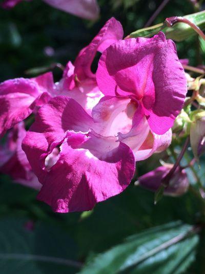 Flowers Are Blooming San Francisco Botanical Garden Flowers,Plants & Garden Purple Flower EyeEm Nature Lover