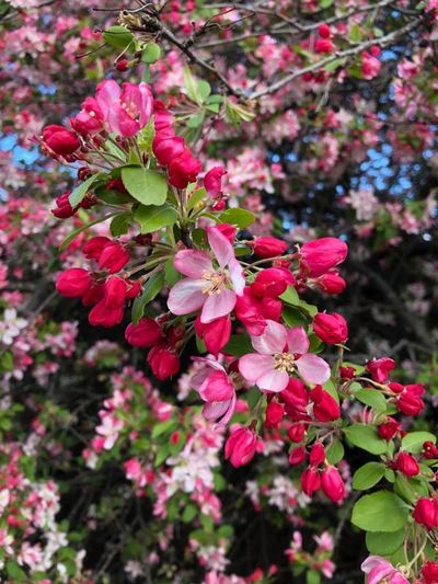 Taking Photos Enjoying Life Hello World Hanging Out Flower beauty nature tree color.