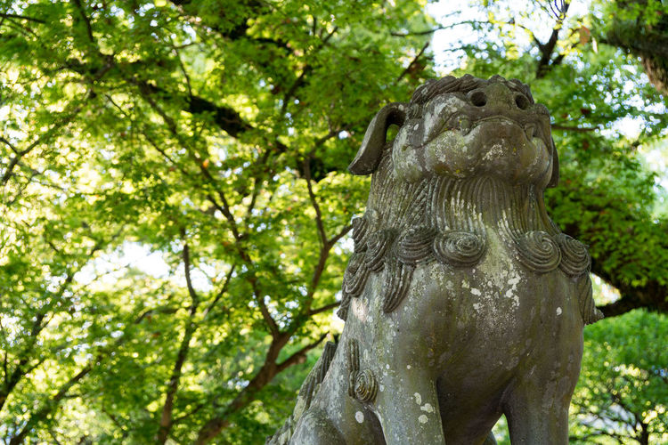 Japan Lion Shine Branch Close-up Day Growth Nature No People Outdoors Sculpture Statue Tree Tree Trunk