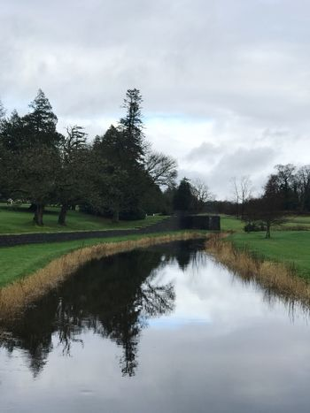 Tree Grass Tranquil Scene Sky Nature Tranquility Beauty In Nature Reflection Field Scenics Outdoors Day Landscape Cloud - Sky Green Color No People Water Growth Ireland Lough Rynn