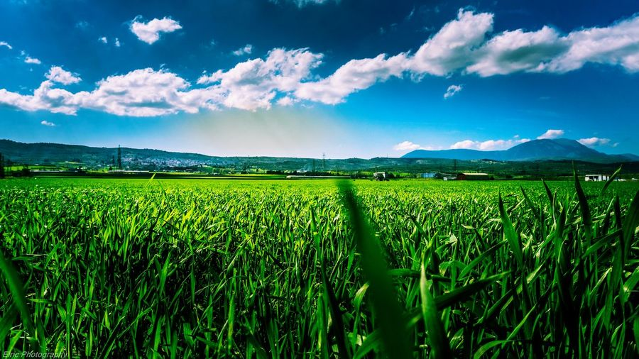 Open Field's. Open Field's Horizon Open Horizon Taking Photos Check This Out Hi! Enjoying Life Sony Sony A6000 Outside Photography Landscape Greece Green POV Surface Level Surface