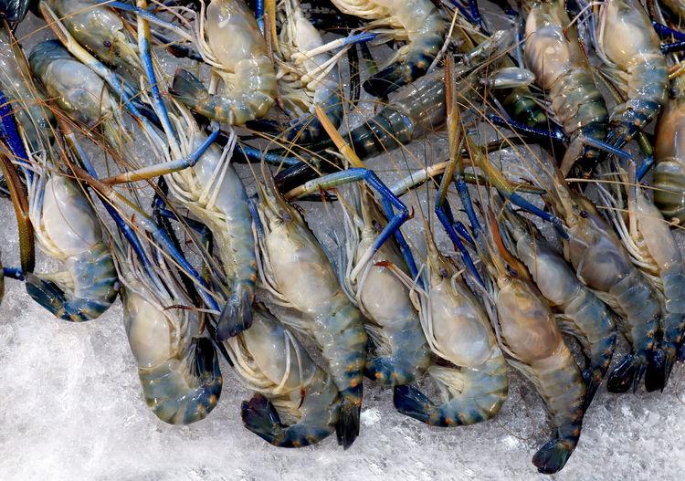 shrimp, prawn,