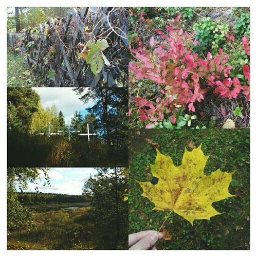 латвия Latvia VSCO EyeEm Autumn Fall осень Autumn Colors краски осени