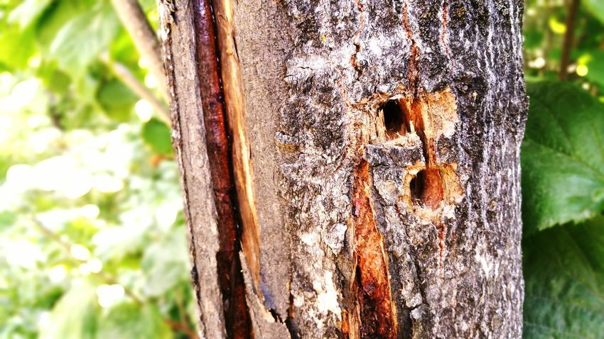 EyeEm Selects Tree Trunk Day Focus On Foreground Close-up Tree Outdoors No People Nature Growth Animal Themes