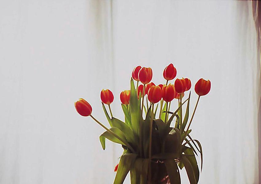 Lomo LC-A Lomography Lomo Tulpi Tulpen Flowers Flower Blumen Analog Analog Photography