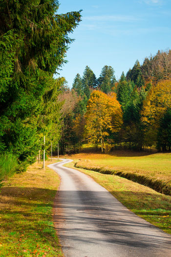 Autumn Country Road Countryside Country Fallen Tree Plant Beauty In Nature Road Nature Growth Transportation Direction No People Tranquility Scenics - Nature Sky The Way Forward Tranquil Scene Day Green Color Change Yellow Landscape Outdoors Greenery Pine Tree vanishing point Asphalt Single Lane Road
