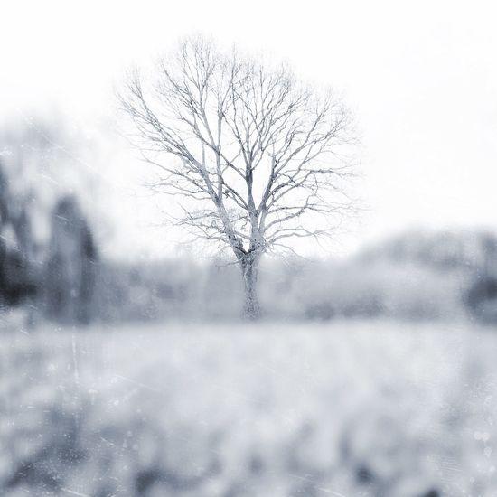 First Eyeem Photo Winter Tree