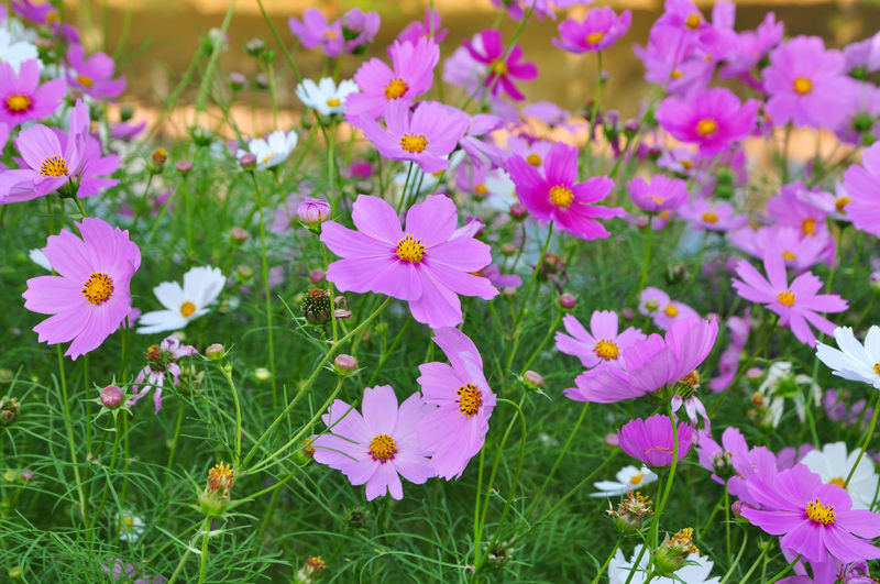 beautiful flowers Flower Nature Beauty In Nature Plant Meadow Summer Growth Outdoors Flower Head Petal Grass Field Purple Day Freshness Springtime