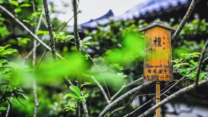 The Great Outdoors - 2017 EyeEm Awards Naturelovers Outdoors Nature Nature_perfection Nature Photography Nature_collection Kyoto Japan Canonphotography Photoshoot Justgoshoot Canon