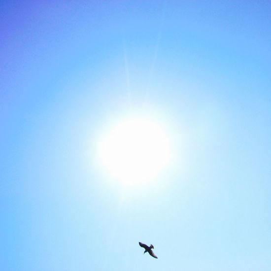 Birds Sky Cobalt Blue By Motorola