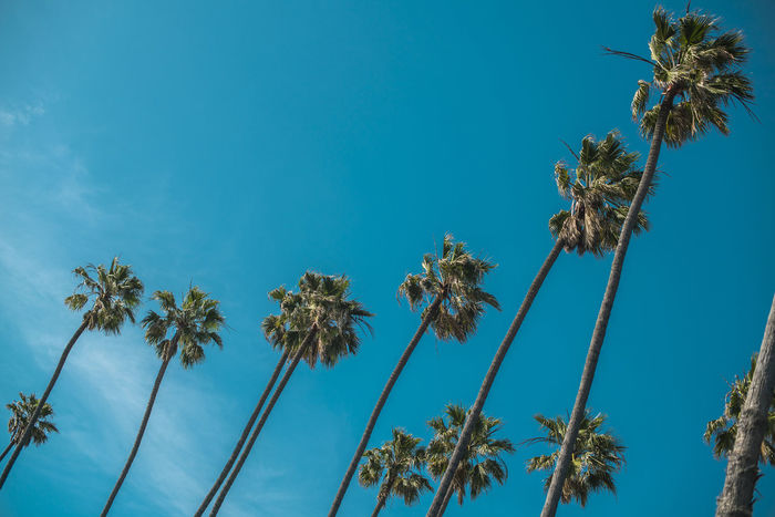 Avengers Beach Blue Califonia Beach California Coast EyeEmNewHere Livestyle Losangeles Low Angle View Nature Outoor Palm Palm Tree Palmeras Palmeras🌴 Santa Monica Scenic Landscapes Sky Sky And Clouds Tranquility Tree Venice Beach