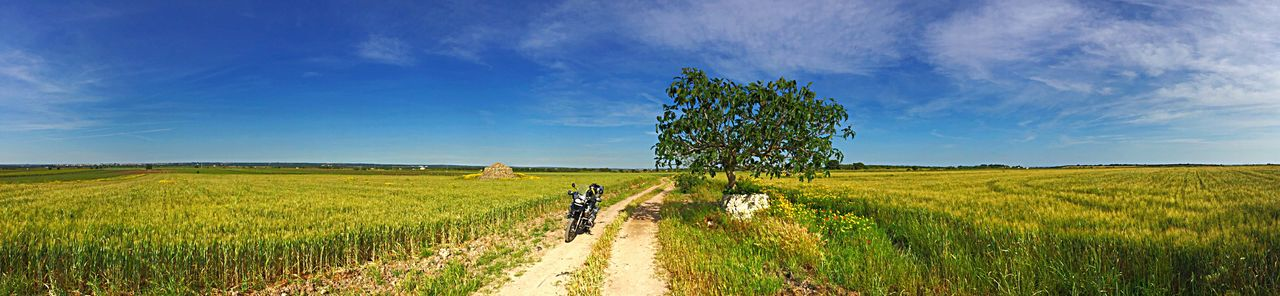 Campo Verde Grano Albero Natura Motorcycles Adventure Adv