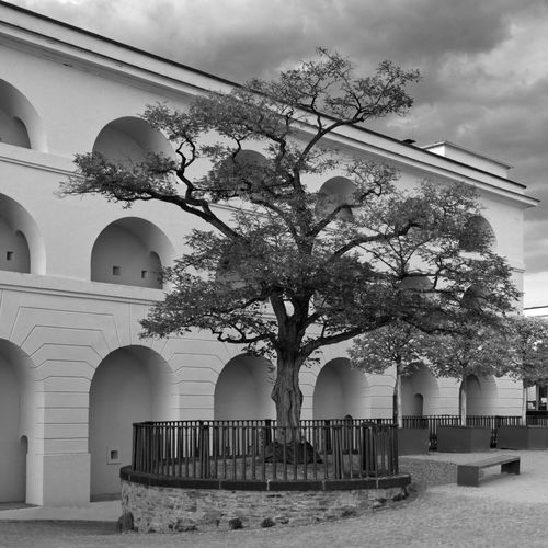 Tree by historic building against sky
