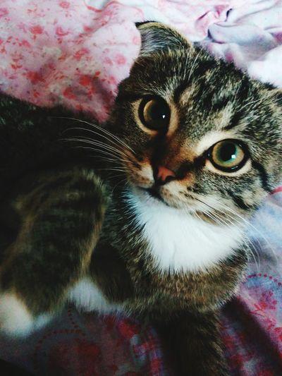 Cat кот кошка котэ Pets Pet