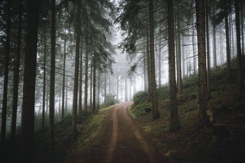 Fog Germany Exploring Nature Mountains Landscape Power In Nature Rural Outdoors EyeEm Best Shots Travel Vscocam Explore Erzgebirge Forest Morning
