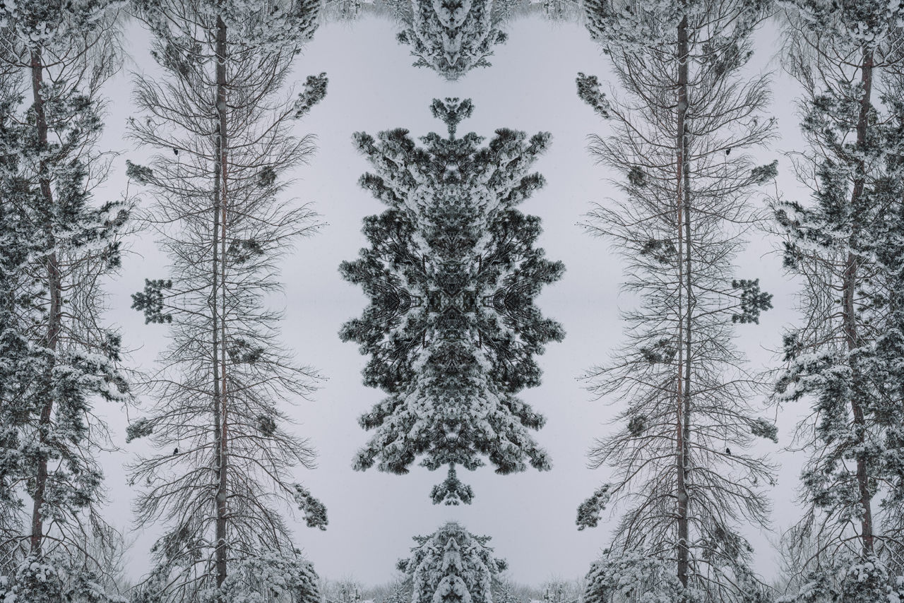 TREES IN FOREST DURING WINTER SEASON