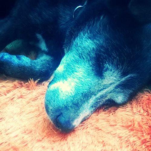 My Dog Betty i Love You Forever😍 Dog Instagramhub Live Doglive DogLove Cute