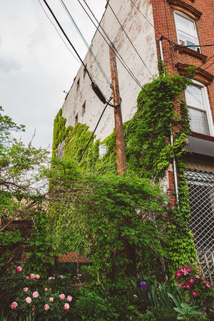 Plants Plant Outdoors New York Growing Greenery Garden Flowers Flower Colorful Color Blooming Beauty In Nature Architecture Urban Landscape Brooklyn Apartment Home House Urban City Sky Window Building Exterior Building