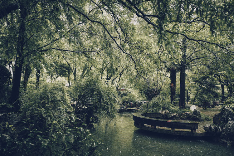 Naoki_n_eyeemgallery Art Forest Photography Photography Photoshop Oil Painting Oil Shanghai, China Tree Plant Water Nautical Vessel Mode Of Transportation Tranquility Forest Transportation Growth Beauty In Nature Day Nature River Branch Green Color Land