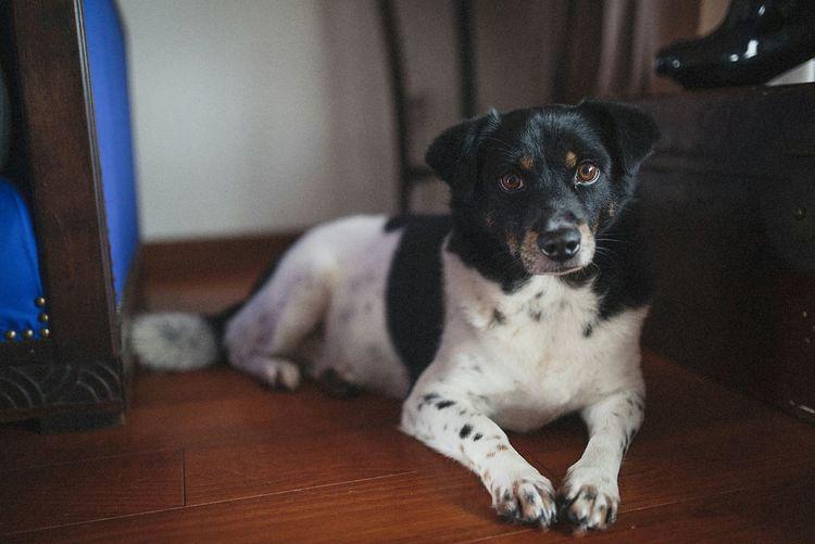 Dog Thinkadoption Shanghai Nikon Take Photos Color Portrait Hello World Taking Photos Getting Inspired 35mm