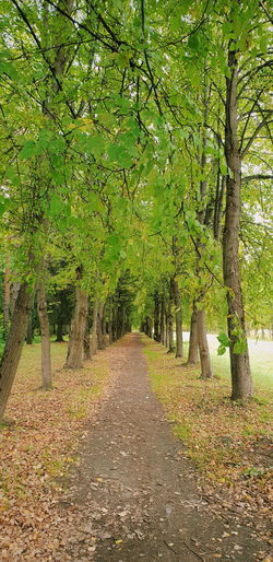 Withgalaxy снятонаgalaxy Park Saint Petersburg Санкт-Петербург Outdoors Tree Rural Scene Agriculture Green Color Landscape Dirt Track Pathway Long Treelined Walkway Narrow vanishing point Empty Road Diminishing Perspective Woods