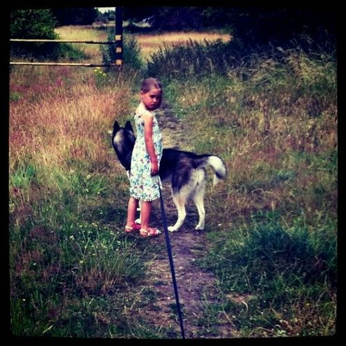 Moody Daughter Husky ♡ Field Dog Walking Outdoors Beauty In Mood