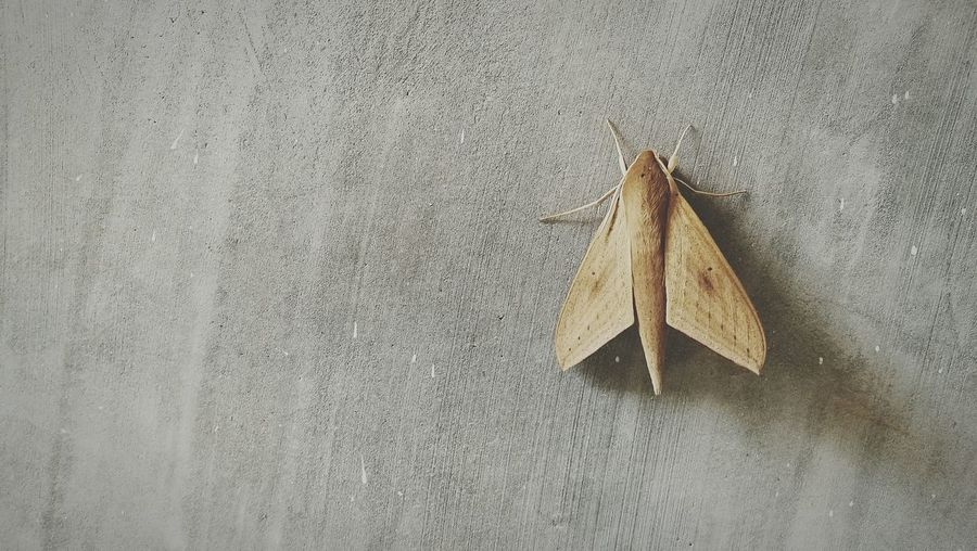 Airplane... Butterfly Concrete Wall Insect