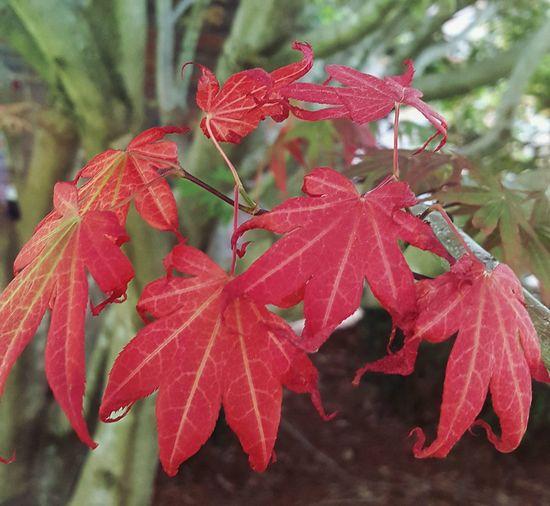 my maple in change. Autumn Branch Flower Head Change Tree