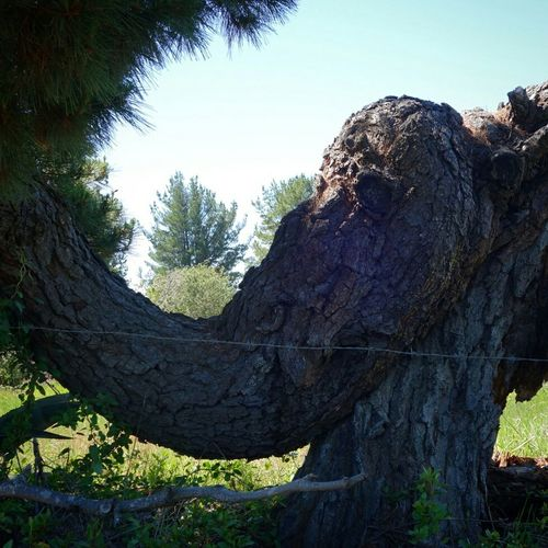 Elefantree 🐘Sony Qx100 Elephant Tree Nature Chile