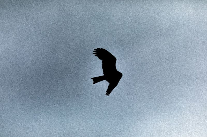 Low angle view of bird flying against the sky
