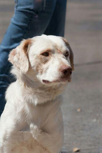 Scratch♡ www.rescueonespringfield.com Hello World Rescuedog Adopt Springfield, MO Need A Friend Dog Volunteer Missouri Cute Pets