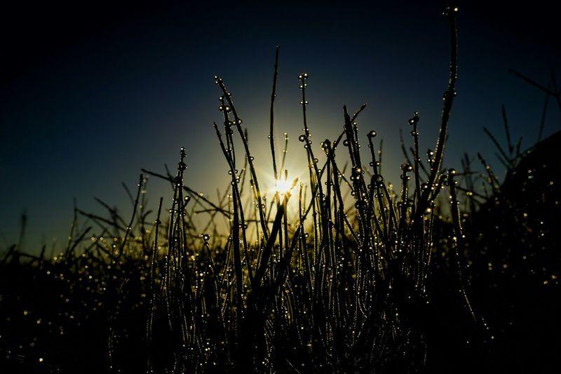 朝露 Morning Dew Drops Sunrise Reflection Nature Light And Shadow Taking Photos Getting Inspired Macro Fine Art Landscapes Kira✨kira✨ EyeEm Best Shots My Best Photo 2015 15_10