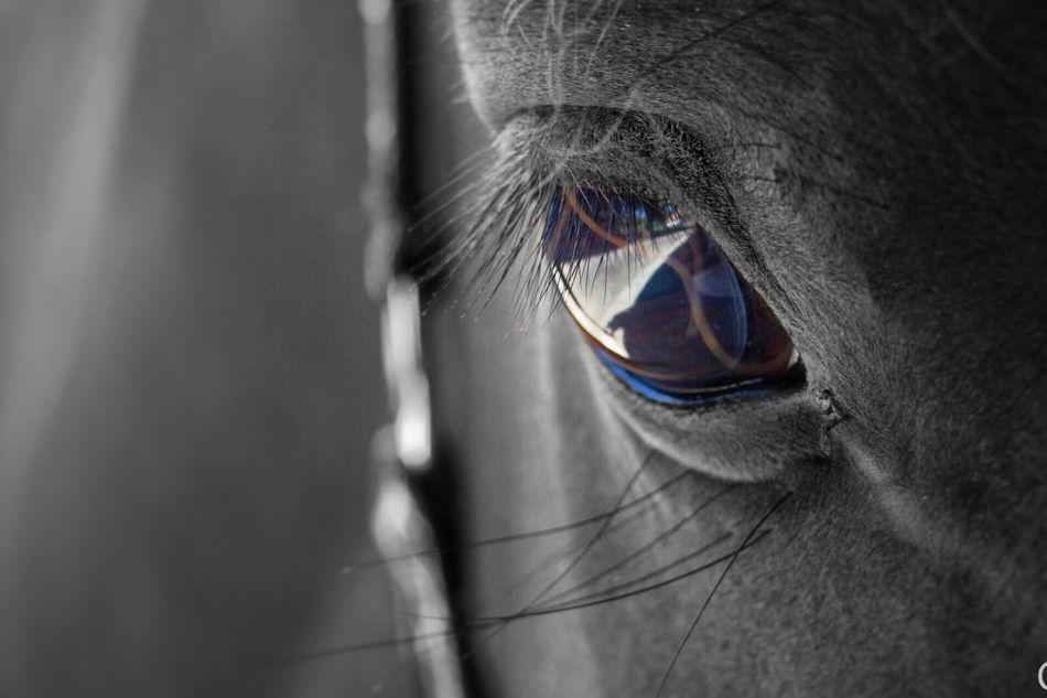 Horseeye First Eyeem Photo