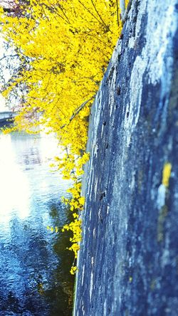 Riverside Sunny Afternoon River Water Relaxing Afternoon Walk Enjoying Life Sunny Sunny Day Spring Spring Has Arrived Yellow Yellow Flowers Wall