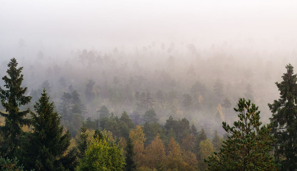 Morning fog and woodland landscape in Torronsuo National Park, Finland Autumn Finland Misty Morning National Park WoodLand Beauty In Nature Day Fall Fog Foggy Morning Forest Growth Hazy  Landscape Mist Nature No People Outdoors Pine Tree Scenics Tranquil Scene Tranquility Tree Tree Area