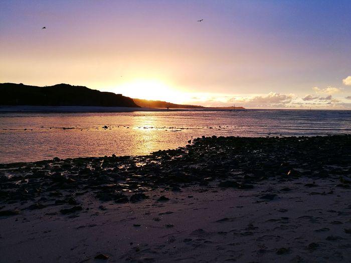 All Hayle the sunset Hayle Hayle Beach Cornwall Cornwall Uk Bird Water Sea Sunset Beach Wave Silhouette Reflection Sunlight Sky Low Tide Atmospheric Mood Coastline EyeEmNewHere