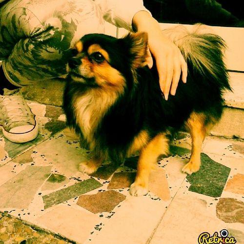 Corsica Dog Retrica @evasculac7 Bonifacio Franch