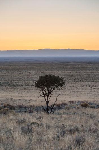 Lone Tree at sunset Colorado Dunes Mosca Landscape Getlost Explorer Sand Dune Sunset Cold Temperature Winter Beach Sand Yellow Desert Atmospheric Mood Single Tree