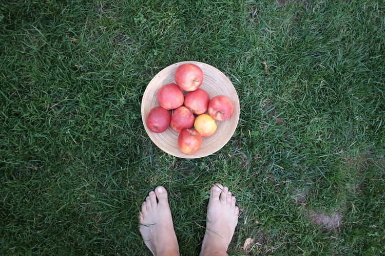 Low section of person standing by fresh apples in plate on grass at back yard