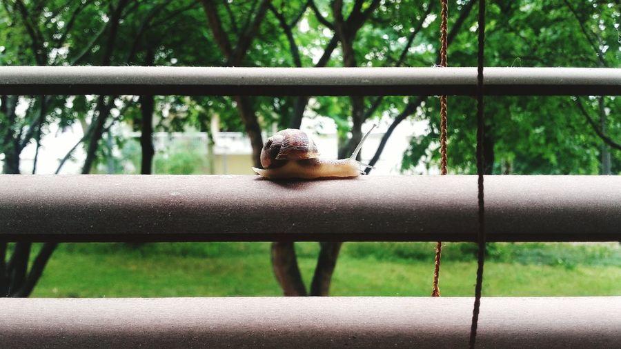 Snail on railing