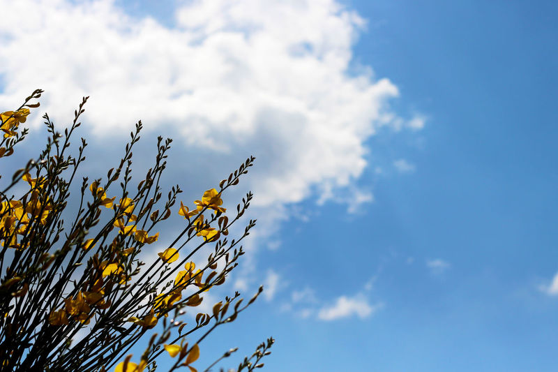Beauty In Nature Blooming Close Up Close-up Cloud Cloud - Sky Cloudy Day Flower Flowers Fragility Greece Growth In Bloom Lesbos Lesvos Low Angle View Nature No People Outdoors Plant Scenics Sky Tranquility Yellow