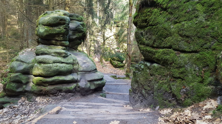 Ancient Civilization Art And Craft Beauty In Nature Day Growth Human Representation Moss National Park Nature No People Outdoors Rock - Object Saxon Switzerland Schwedenlöcher Sculpture Statue Stone Material Sächsische Schweiz Tree