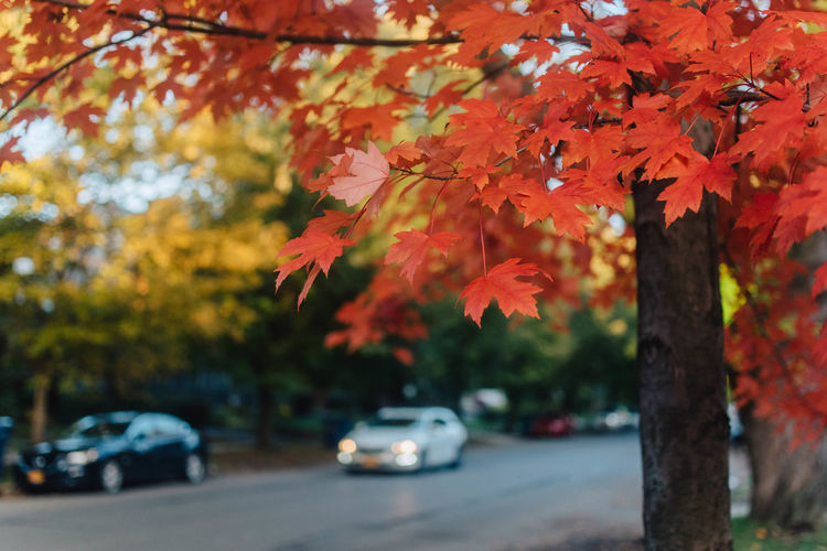 This Is Strength Orange Color Beauty In Nature Land Vehicle Transportation Change Leaf No People Plant Mode Of Transportation Autumn Focus On Foreground Plant Part Day Tree Car Outdoors Motor Vehicle Nature Road Selective Focus Maple Leaf Leaves Natural Condition