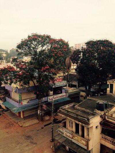 Hassan Karnataka India 2014 Traveling Urban Exploration Streetphotography Trees Flower The Traveler - 2015 EyeEm Awards